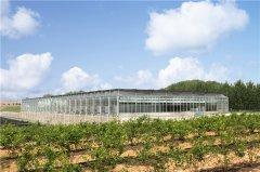 高效蓝莓园,从优质种苗开